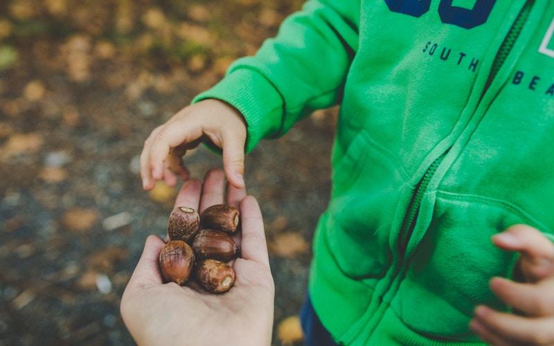 Børn penge opdragelse nødder hænder tælle