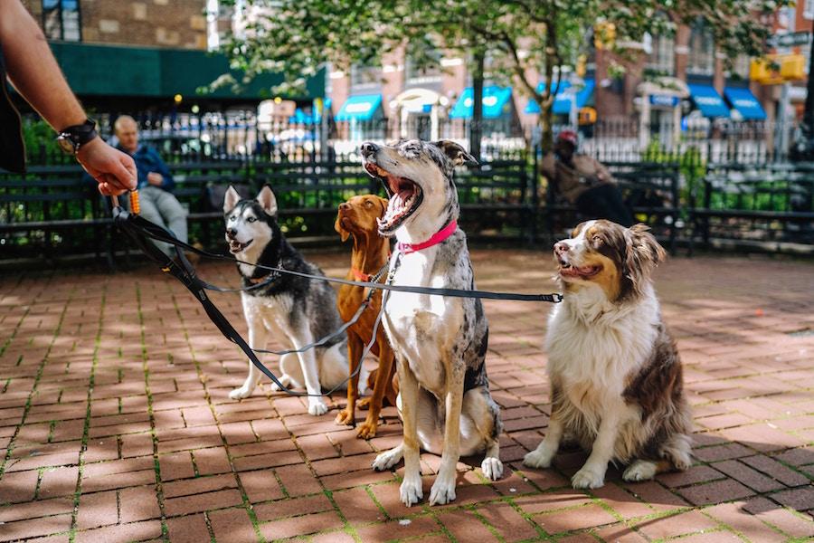 Bliv hundelufter